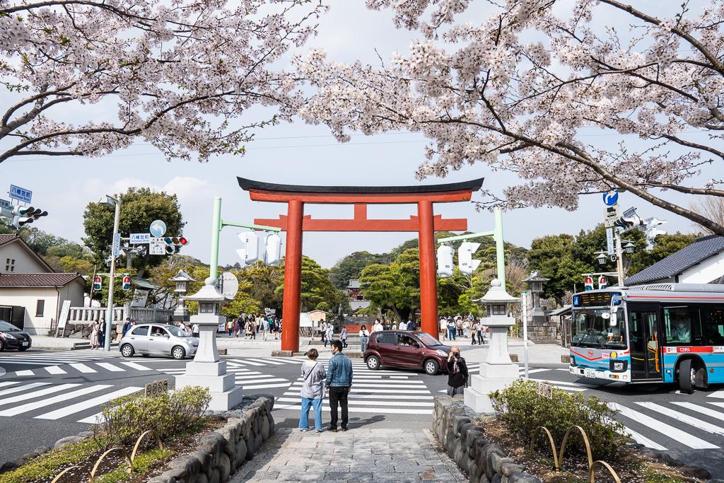 段葛(だんかずら)の桜並木